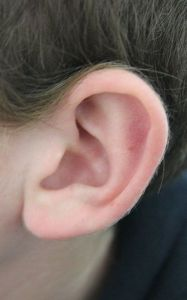 Human ear, courtesy Wikimedia Commons.